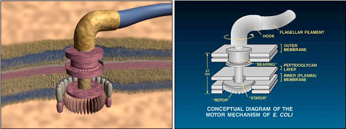 explain the concept of irreducible complexity Science and religion – irreducible complexity popularized the concept of irreducible complexity in the early 1990s so evolution cannot explain it.
